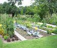 Kiesgarten Anlegen Inspirierend Garden Bee Picture Airyclub Alexstand