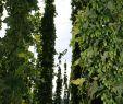 Kleine Gärten Gestalten Beispiele Einzigartig 39 Frisch Kleine Gärten Gestalten Beispiele Reizend