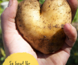 Kleinen Garten Bepflanzen Genial Kartoffelanbau Im Blumentopf Für Den Kleinen Garten Oder