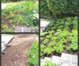Kleines Beet Gestalten Einzigartig 37 Einzigartig Sehr Kleiner Garten Ideen Frisch