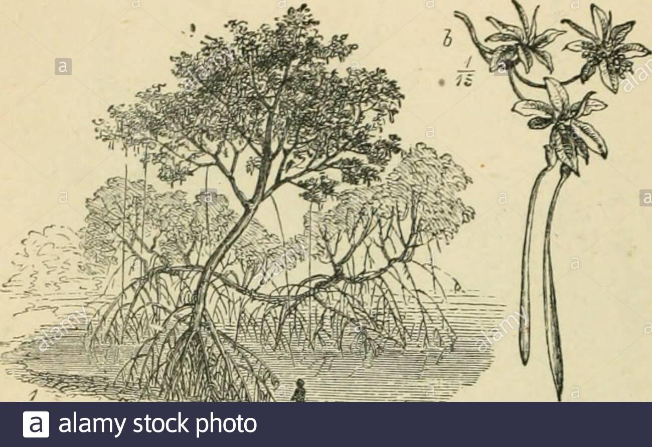 bewohner der welt oder menschen tieren und pflanzen ist ein beliebtes berucksichtigung der rassen und nationen der menschheit der vergangenheit und der gegenwart und tiere und pflanzen das bewohnen des grossen kontinenten und inseln 14 orchil 15 erde ndt 16 akazie des nils 702 afrikanische pflanzen zu t ts i 17 iiangeove es ist offensichtlich dass das reide so vorherrschende ineurope und asien in afrika weniger wichtig sind dennoch in bestimmten regionen sie largelygrown sind weizen wurde longbeen in agypten angebaut butrice 5 mais hirse formsof dhurra oder sorg 2afnhb3