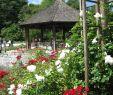 Kreative Gartenideen Selber Machen Einzigartig Datei Augsburg Bot Garten Am Rosenpavillon –