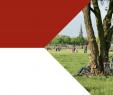 Kreative Ideen Für Den Garten Neu Pdf –kosystemleistungen In Der Stadt – Gesundheit Schützen