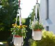 Lampions Garten Wetterfest Inspirierend Die 56 Besten Bilder Zu Garten Und Terrasse