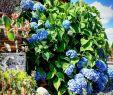 Landhausstil Gartendeko Best Of ▷ Veronika Lustova Villagelady Veronika Lustová Každ½m