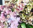 Landhausstil Gartendeko Schön Happy Mittwoch Ihr Herzchenverteiler 💕 Hortensien