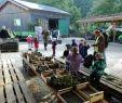Landschaftsgärtner Frisch Greenteam Gartengestaltung Natacharoussel