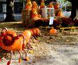Männer Kostüm Halloween Einzigartig Chatham Massachusetts America S Best towns for