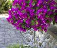 Mediteraner Garten Inspirierend Pin Von Lorelle Viviers Auf Gardening