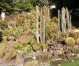 Mediteraner Garten Schön Gartenschau Kaiserslautern КайзерсРаутерн Ручшие советы