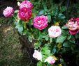 Mediterrane Gartendeko Elegant 1392 Best Gardendesign Images