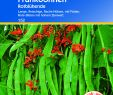 Mediterrane Gartengestaltung Neu Prunkbohnen Rotblühende