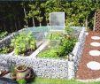 Mediterraner Garten Best Of Mediterranen Garten Anlegen Das Beste Von Haus Plant Ideen