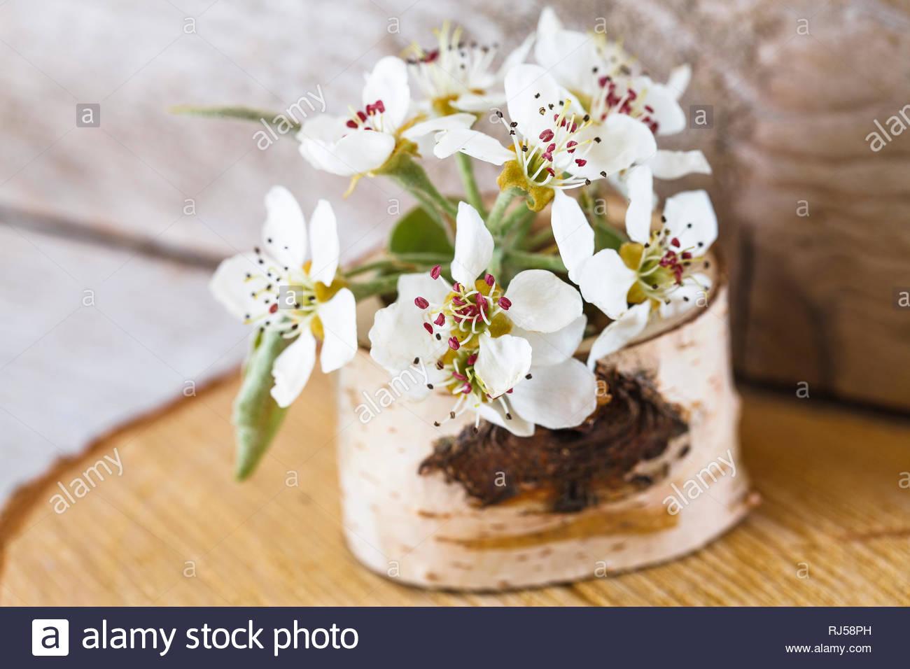 eine vase aus birkenholz birnenblten RJ58PH