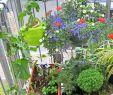 Mini Garten Selber Machen Elegant 37 Das Beste Von Pflanzen Im Garten Luxus
