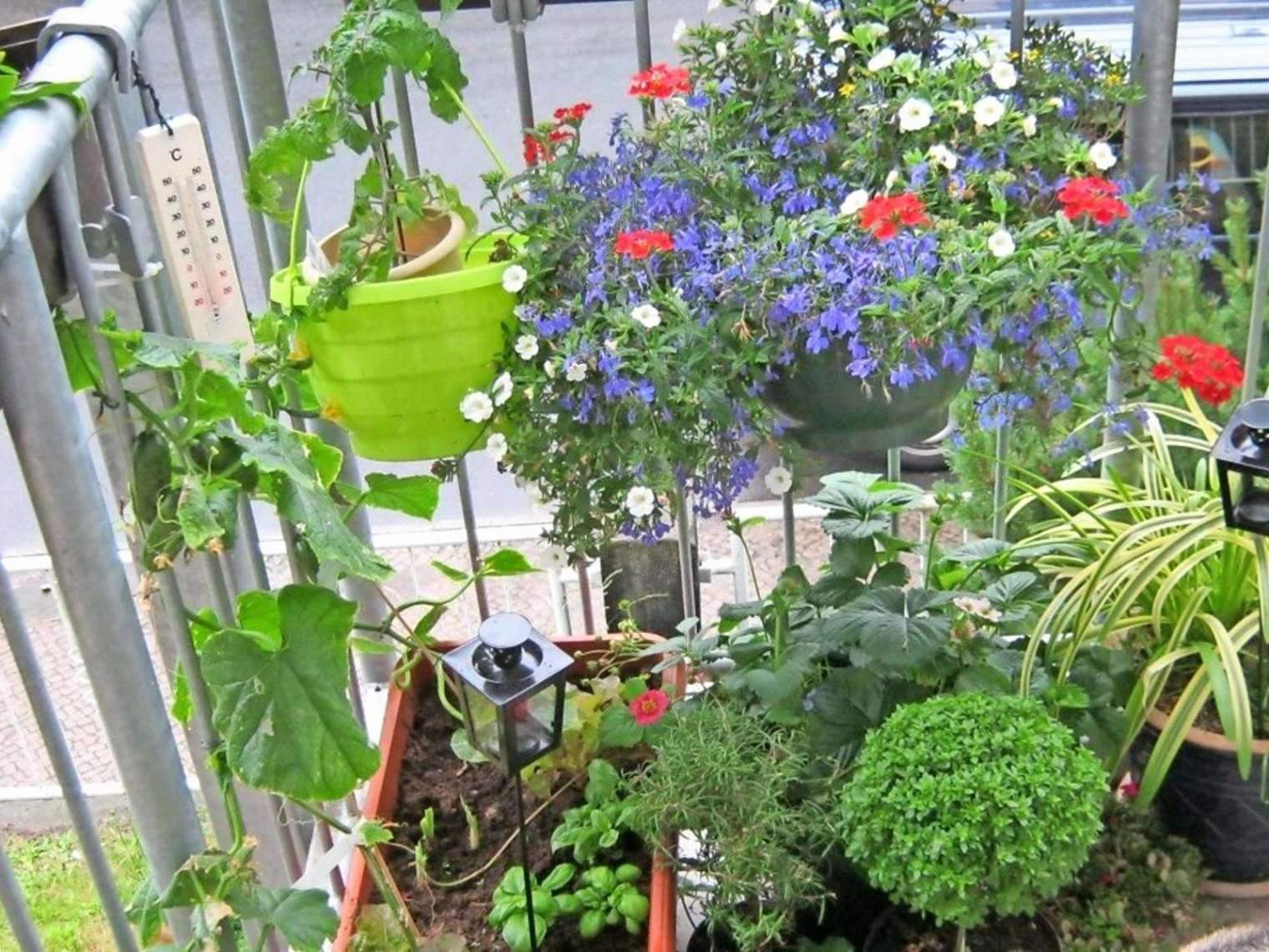 pflanzen im garten das beste von garten pflanzen sichtschutz temobardz home blog of pflanzen im garten