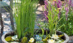 27 Einzigartig Mini Garten Selber Machen
