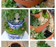 Miniatur Garten Deko Frisch Diy Flower Pot Fairy Garden Step by Step Diy Fairy