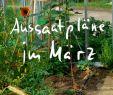 Miniatur Garten Selber Machen Elegant Die 137 Besten Bilder Von Pflanzen Und Garten