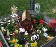 Miniatur Garten Selber Machen Schön Die 274 Besten Bilder Von Fairy