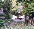 Naturgarten Gestalten Frisch Gartenimpression