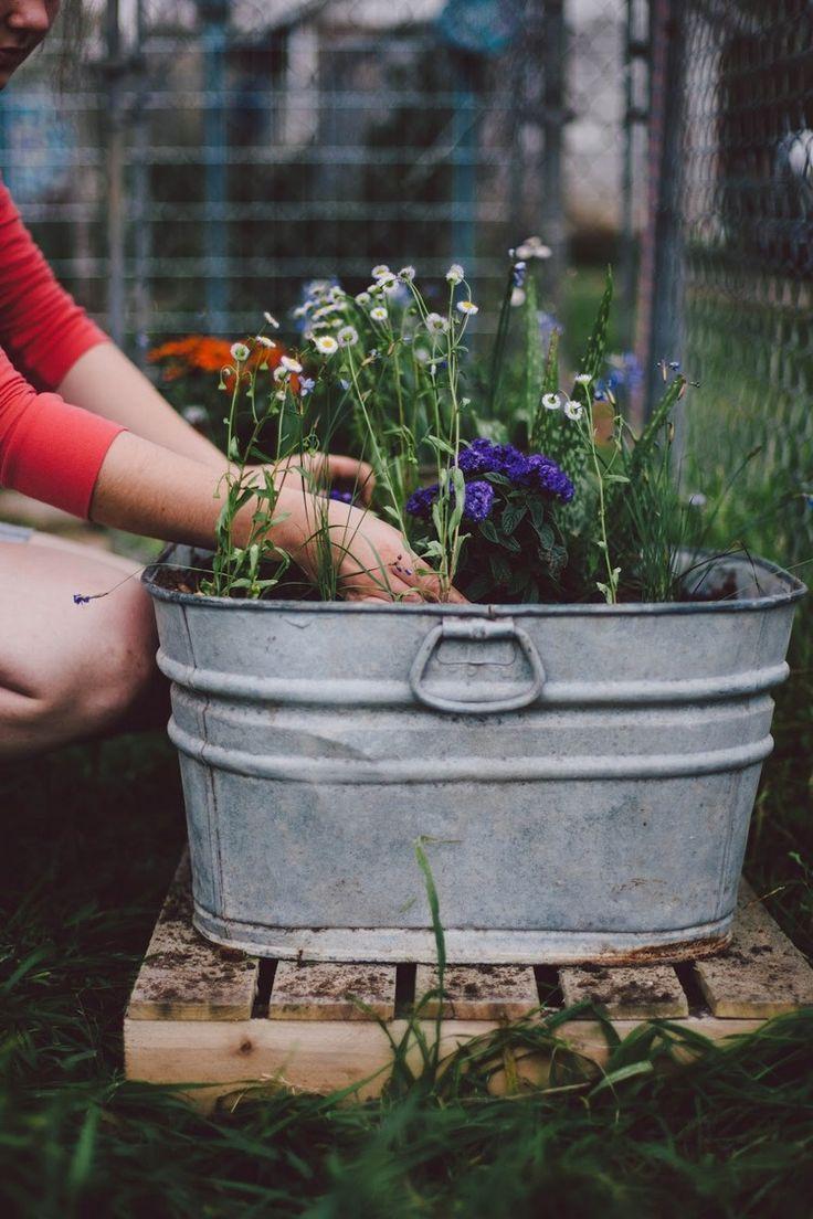 Naturgarten Gestalten Luxus Zinkwanne Bepflanzen Und Als Pflanzkübel Oder Miniteich