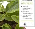 Naturnaher Garten Anlegen Elegant Die 10 Kaum Zu Tötenden Pflanzen