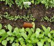 Naturnaher Garten Anlegen Elegant Gemüse Anbauen Ein Anbauplan In 7 Schritten