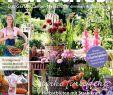 Naturnaher Garten Pflegeleicht Anlegen Best Of Calaméo Mein Para S 4 2018 Lambert