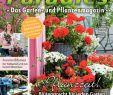Online Gartenshop Luxus Calaméo Mein Para S 2 2018 Lenders