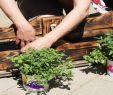 Paletten Garten Deko Neu Paletten Bepflanzen Small Market Gardening as A Career