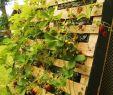 Paletten Garten Deko Schön ▷ über 1001 Ideen Für Den Bau Einer Pflanzenwand In Einer