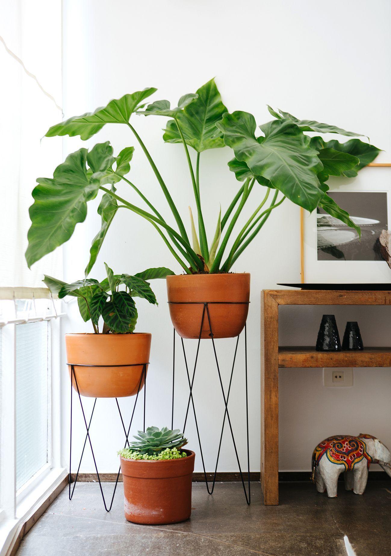 Pflanzen Deko Ideen Frisch Tropische Brisen In Der Dekoration Deko Tipps & Trends