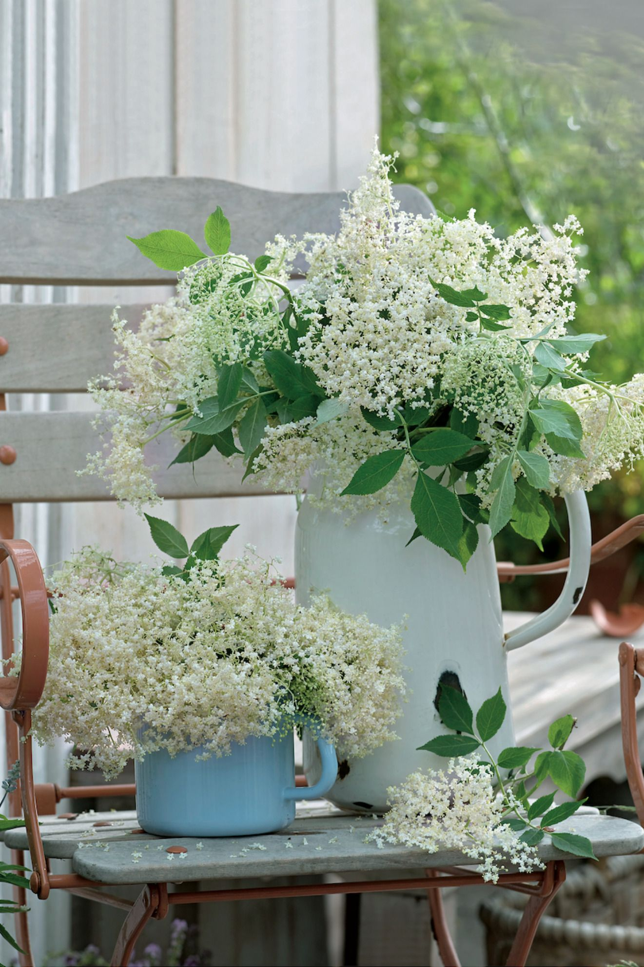 Pflanzen Deko Ideen Inspirierend Holunderblüten Lassen Sich Zu Allem Möglichen Verarbeiten