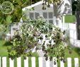Pflanzen Deko Kreativ Und Selbstgemacht Luxus Deko Und Diy Blog Kreative Deko Ideen Für Ein Schönes