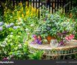 Pflanzen Garten Best Of Blumen Pflanzen