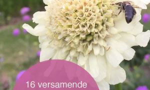 34 Inspirierend Pflegeleichte Gartenpflanzen