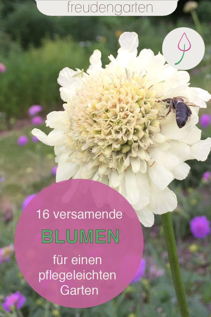 Pflegeleichte Gartenpflanzen Frisch Blackbox Gardening CÄ°cekler