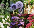 Pflegeleichte Gartenpflanzen Inspirierend Pflanzen Für Deinen Japangarten Jetzt Bestellen