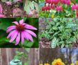 Pflegeleichte Gartenpflanzen Schön 16 Pflegeleichte Pflanzen Für Ihren Garten