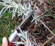 Pflegeleichter Garten Bilder Luxus Pin Auf Pflegeleichter Garten