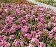 Pflegeleichter Garten Neu Kletterpflanzen
