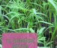 Pflegeleichter Garten Schön Sich Selbst Aussäendes Gemüse