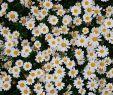Pinterest Garten Luxus ʟɪᴋᴇ ᴡʜᴀᴛ ʏᴏᴜ Sᴇᴇ ғᴏʟʟᴏᴡ ᴍᴇ ғᴏʀ ᴍᴏʀᴇ