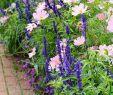 Pinterest Gartenideen Einzigartig Best Diy Cottage Garden Ideas From Pinterest 26