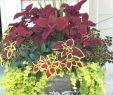 Pinterest Gartenideen Genial Coole 90 Ausgefallene Gartenideen Pro Grünzeug Und