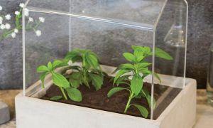 40 Genial Pro Idee Garten