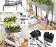Rankgitter Aldi Inspirierend Aldi Süd – Gartenbroschüre – 2019