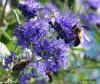 Rostartikel Für Den Garten Frisch Gartenblog Zu Gartenplanung Gartendesign Und