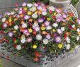 Rostartikel Für Den Garten Neu Stauden Für Den Garten Farbenfroh Und Pflegeleicht